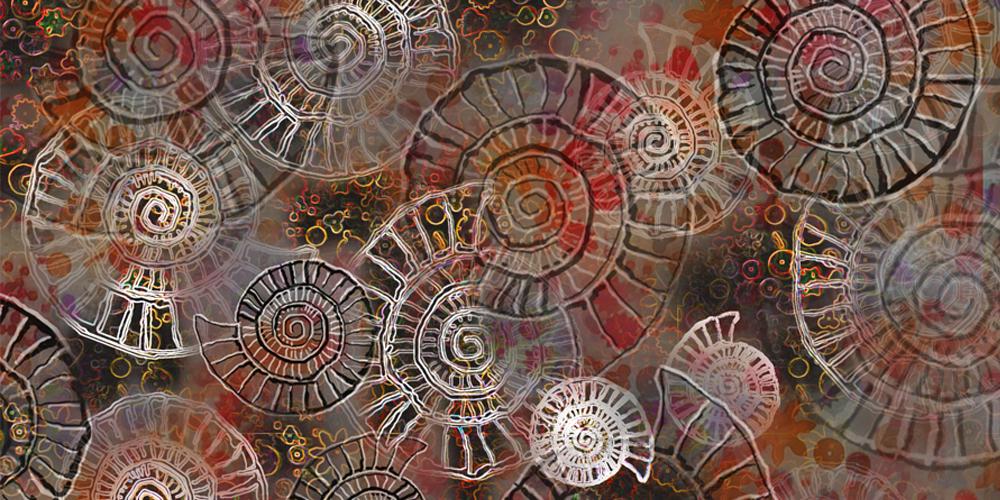Ammonite artwork